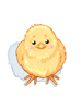 Chickhat.png
